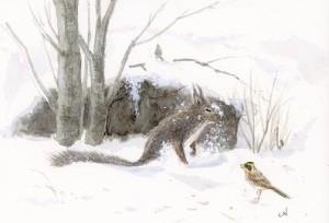 雪の中のリス