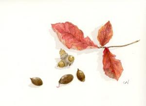 ドングリと葉