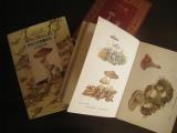 キノコの本
