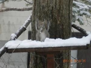 雪の日の餌台にリス