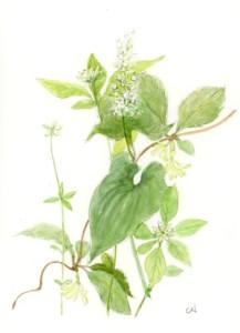 6月の白い花