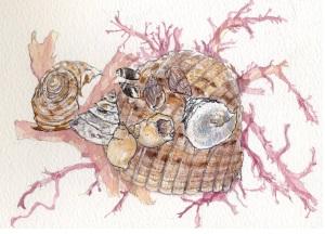 ヤツシロガイと小さい巻貝いろいろ
