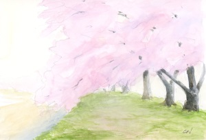 千曲川堤の桜