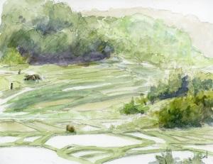 Terraced rice paddies (May)