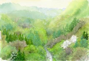 橋の上から眺める新緑の谷
