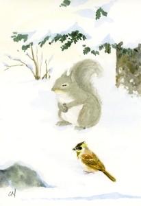 ニホンリス冬