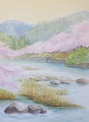 今年の桜 2017